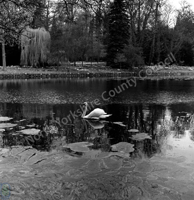 Swan Lake, Thorp Perrow